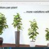 دانلود رایگان ۱۰۰۰ آبجکت سه بعدی گلدان ، درخت و گل و گیاه ۳Ds Max