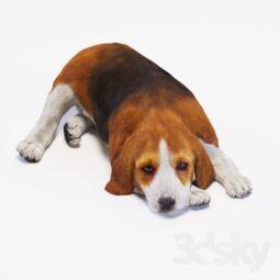 دانلود آبجکت ۳d Max حیوانات 2 255x255 - استودیو هنر و معماری دیزاین پلاس