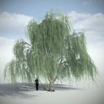 دانلود مدل سه بعدی درخت طبیعی 1 150x150 - مجموعه کامل مدل سه بعدی درخت و گل و گیاه شرکت Vizpark