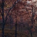 دانلود مدل سه بعدی درخت طبیعی 10 150x150 - مجموعه کامل مدل سه بعدی درخت و گل و گیاه شرکت Vizpark