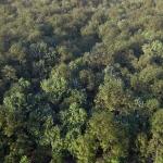 دانلود مدل سه بعدی درخت طبیعی 11 150x150 - مجموعه کامل مدل سه بعدی درخت و گل و گیاه شرکت Vizpark