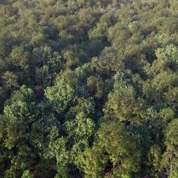 دانلود مجموعه بزرگ مدل سه بعدی درخت و گل و گیاه طبیعی شرکت Vizpark
