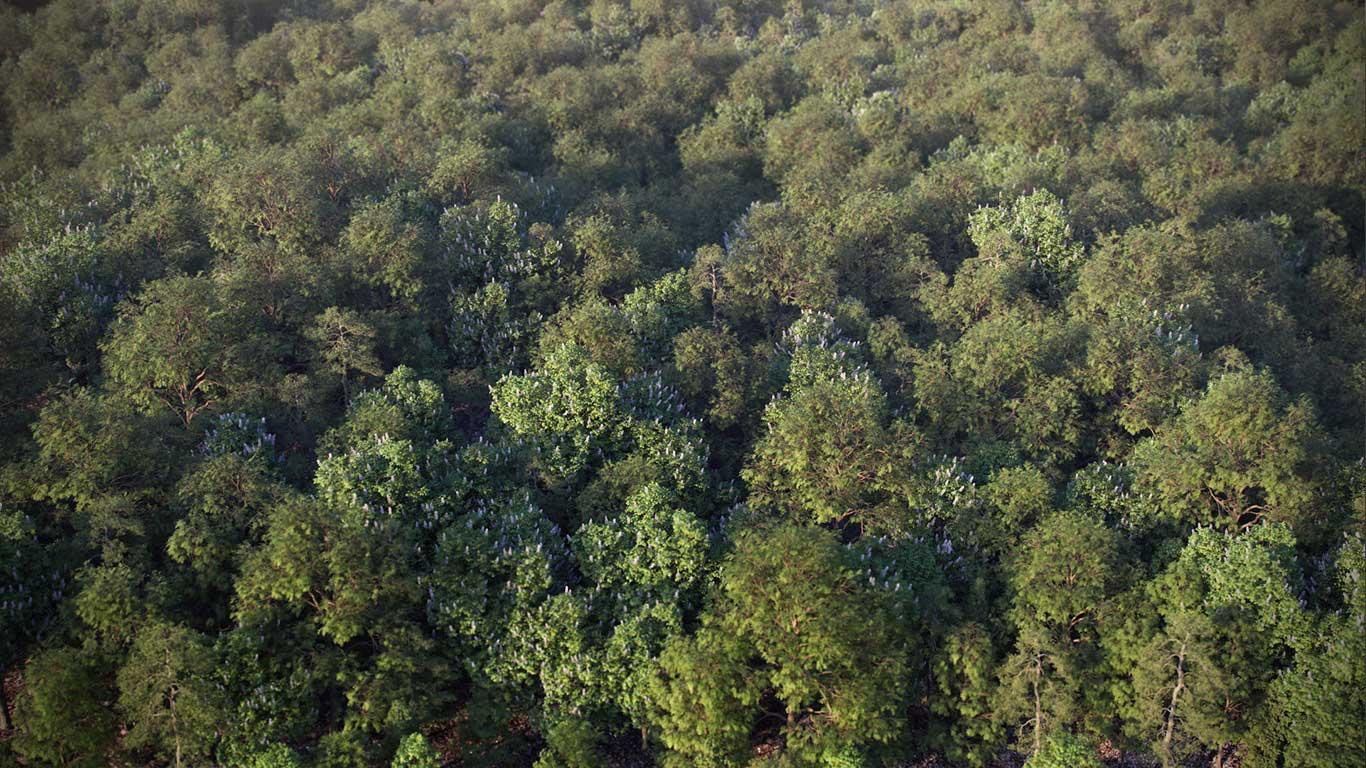 دانلود مدل سه بعدی درخت طبیعی (۱۱)