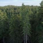 دانلود مدل سه بعدی درخت طبیعی 13 150x150 - مجموعه کامل مدل سه بعدی درخت و گل و گیاه شرکت Vizpark
