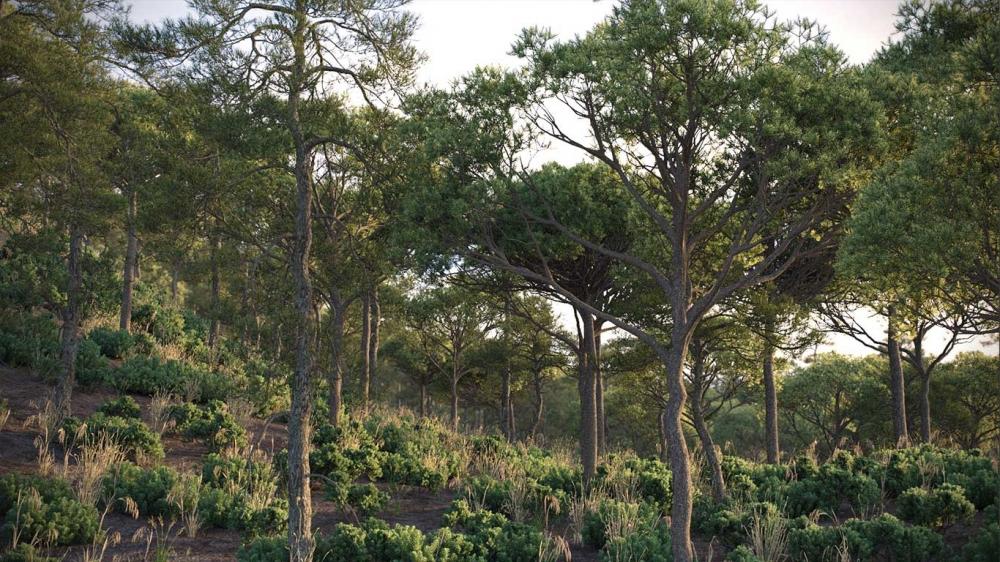 دانلود مدل سه بعدی درخت طبیعی 14 1000x562 - مجموعه کامل مدل سه بعدی درخت و گل و گیاه شرکت Vizpark