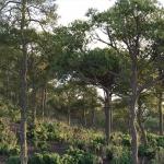 دانلود مدل سه بعدی درخت طبیعی 14 150x150 - مجموعه کامل مدل سه بعدی درخت و گل و گیاه شرکت Vizpark