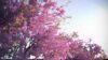 مجموعه کامل مدل سه بعدی درخت و گل و گیاه شرکت Vizpark