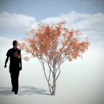 دانلود مدل سه بعدی درخت طبیعی