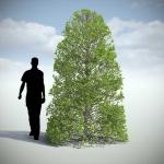 دانلود مدل سه بعدی درخت طبیعی 6 150x150 - مجموعه کامل مدل سه بعدی درخت و گل و گیاه شرکت Vizpark