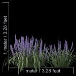 مدل سه بعدی چمن و پوشش گیاهی 3 150x150 - مجموعه کامل مدل سه بعدی درخت و گل و گیاه شرکت Vizpark