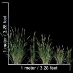 مدل سه بعدی چمن و پوشش گیاهی 9 150x150 - مجموعه کامل مدل سه بعدی درخت و گل و گیاه شرکت Vizpark