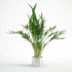 مدل سه بعدی گل و گلدان داخلی 1 150x150 - مجموعه کامل مدل سه بعدی درخت و گل و گیاه شرکت Vizpark