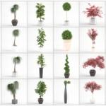 مدل سه بعدی گل و گلدان داخلی 11 150x150 - مجموعه کامل مدل سه بعدی درخت و گل و گیاه شرکت Vizpark