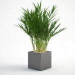 مدل سه بعدی گل و گلدان داخلی 2 150x150 - مجموعه کامل مدل سه بعدی درخت و گل و گیاه شرکت Vizpark