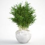 مدل سه بعدی گل و گلدان داخلی 3 150x150 - مجموعه کامل مدل سه بعدی درخت و گل و گیاه شرکت Vizpark
