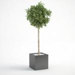 مدل سه بعدی گل و گلدان داخلی 4 150x150 - مجموعه کامل مدل سه بعدی درخت و گل و گیاه شرکت Vizpark