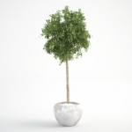 مدل سه بعدی گل و گلدان داخلی 5 150x150 - مجموعه کامل مدل سه بعدی درخت و گل و گیاه شرکت Vizpark