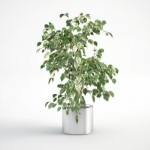 مدل سه بعدی گل و گلدان داخلی 8 150x150 - مجموعه کامل مدل سه بعدی درخت و گل و گیاه شرکت Vizpark