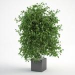 مدل سه بعدی گل و گلدان داخلی 9 150x150 - مجموعه کامل مدل سه بعدی درخت و گل و گیاه شرکت Vizpark