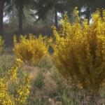 گل و گیاه طبیعی آبجکت سه بعدی 3 150x150 - مجموعه کامل مدل سه بعدی درخت و گل و گیاه شرکت Vizpark