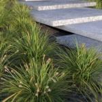 گل و گیاه طبیعی آبجکت سه بعدی 4 150x150 - مجموعه کامل مدل سه بعدی درخت و گل و گیاه شرکت Vizpark