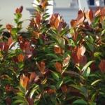 گل و گیاه طبیعی آبجکت سه بعدی 5 150x150 - مجموعه کامل مدل سه بعدی درخت و گل و گیاه شرکت Vizpark