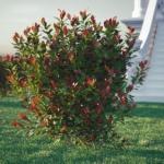 گل و گیاه طبیعی آبجکت سه بعدی 6 150x150 - مجموعه کامل مدل سه بعدی درخت و گل و گیاه شرکت Vizpark