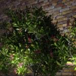 گل و گیاه طبیعی آبجکت سه بعدی 7 150x150 - مجموعه کامل مدل سه بعدی درخت و گل و گیاه شرکت Vizpark
