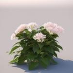 گل و گیاه طبیعی آبجکت سه بعدی 9 150x150 - مجموعه کامل مدل سه بعدی درخت و گل و گیاه شرکت Vizpark