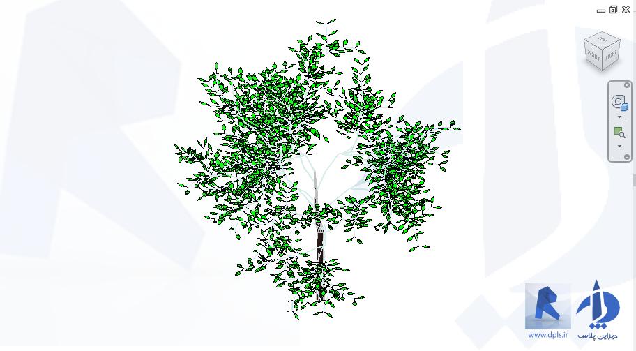27039 Shade Tree 3682 - رویت