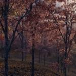 دانلود مدل سه بعدی درخت طبیعی 10 150x150 - دانلود مجموعه بزرگ مدل سه بعدی درخت و گل و گیاه طبیعی شرکت Vizpark